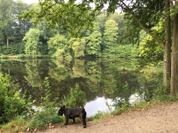 Oscar - min franske bulldog - i naturen