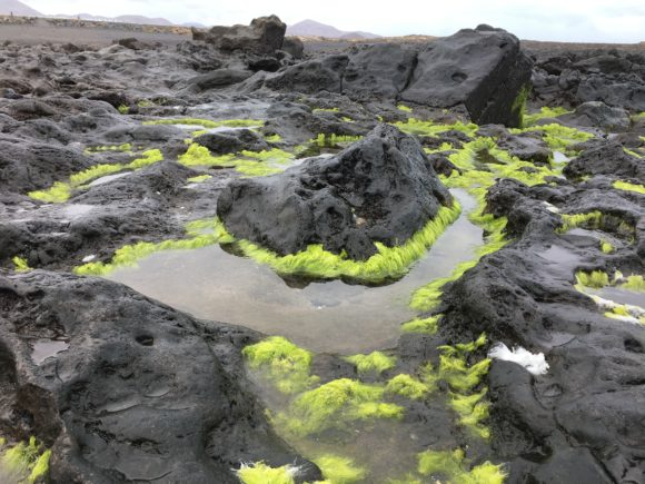 Lava, tang og vand - Lanzarote - Bettina Therese