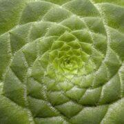 Fraktaler - naturens geometri