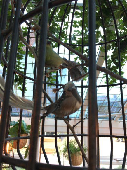 Fugle orangeri Kolding Hotel Apartments