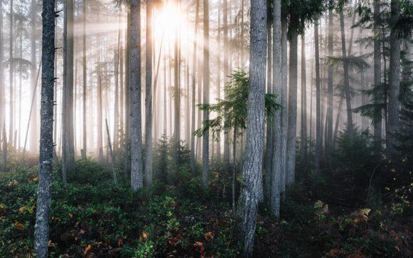 Daylight through trees