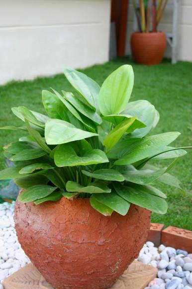 Start med at sørge for at alle dine planter er friske - de må ikke tære på din energi, men skal fylde dig med energi...